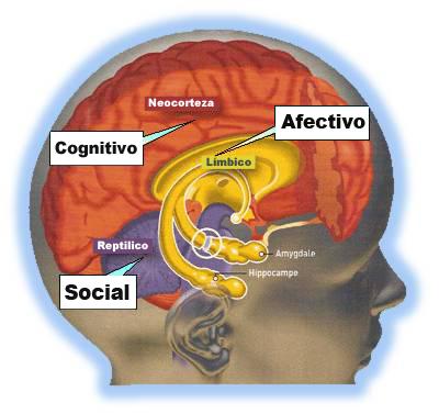 Adolescentes: no son las hormonas, es el cerebro en desarrollo