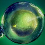 Biopolítica: Gametogénesis artificial: ¿Está cerca el fin de la procreación sexual?