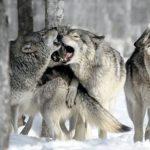 Los nuevos depredadores, «sistémicos y complejos»