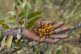 Nutrición: Lecciones de poblaciones ancestrales