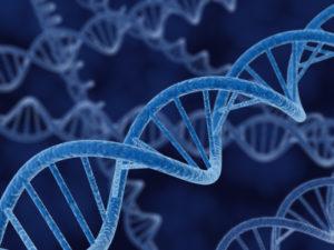 ¿Cómo impacta la pobreza en los genes?