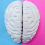 El cerebro no es unisex